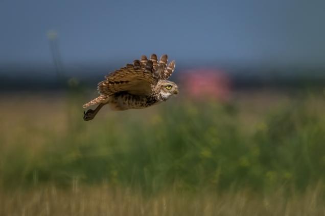 Owl_1281